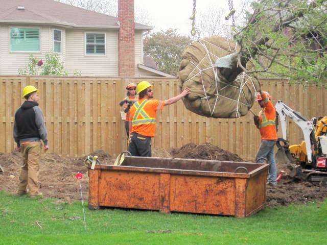Tree Planting London, Ontario