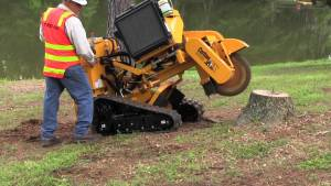 stump removal by grinding in london ontario