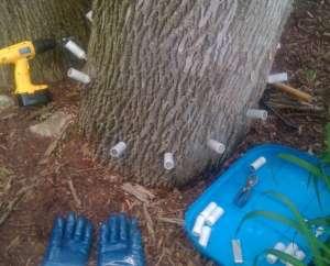 treehealth